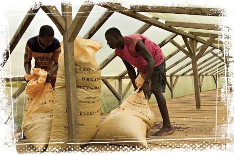 Productores de cacao en Santo Tomé