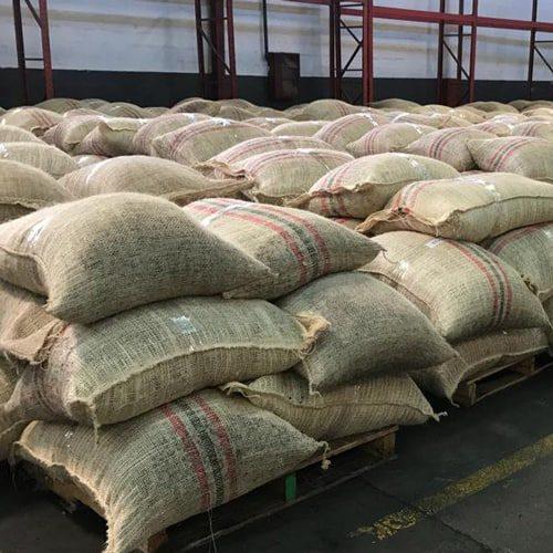 Cacao en sacos