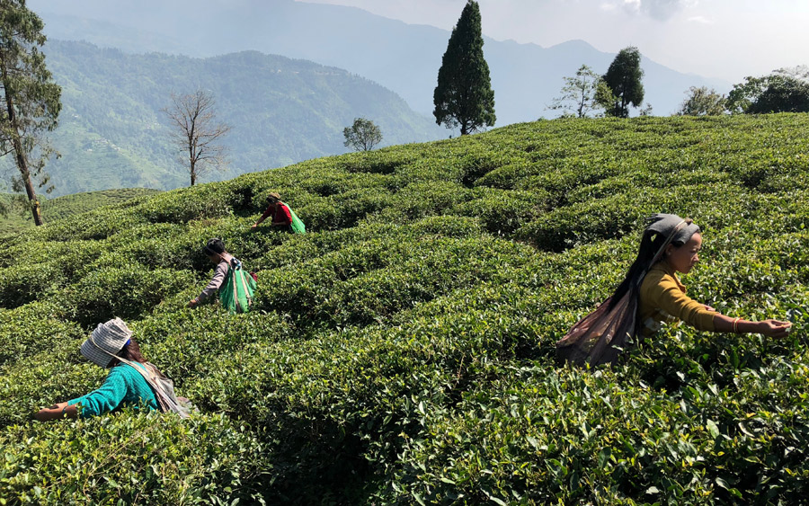 Tea Promoters India