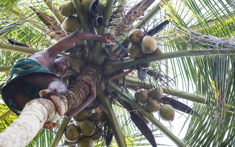 BioFoods Sri Lanka