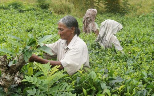 Sahyadri Organic Small Farmers