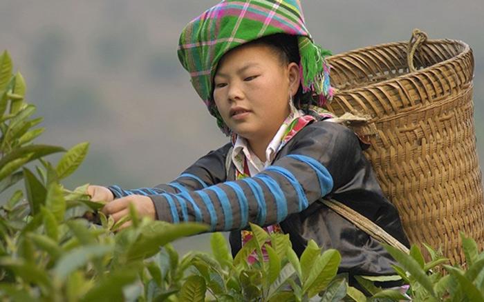 Van Chan Bio Farmer
